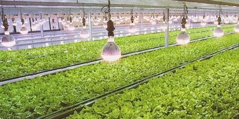 什么是LED植物照明灯饰?你了解吗?